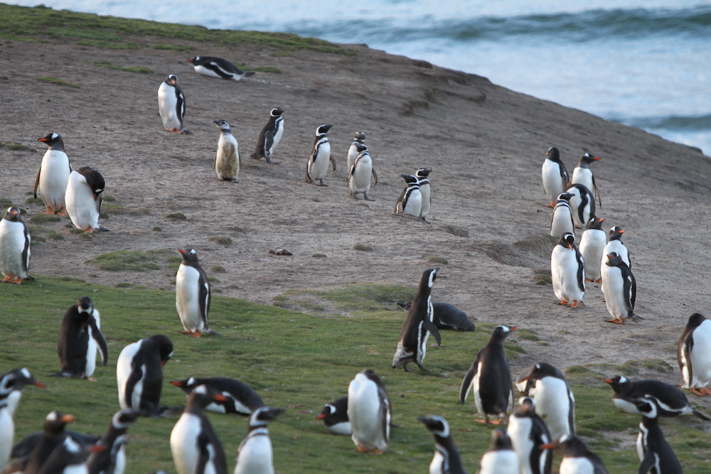 Penguin Quiz – Penguin Counting