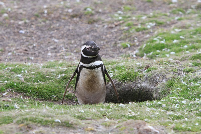 Fieldwork with penguins: A fishy business