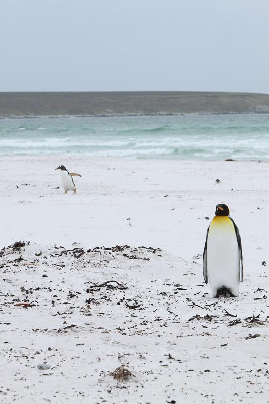 Divorcing Penguins