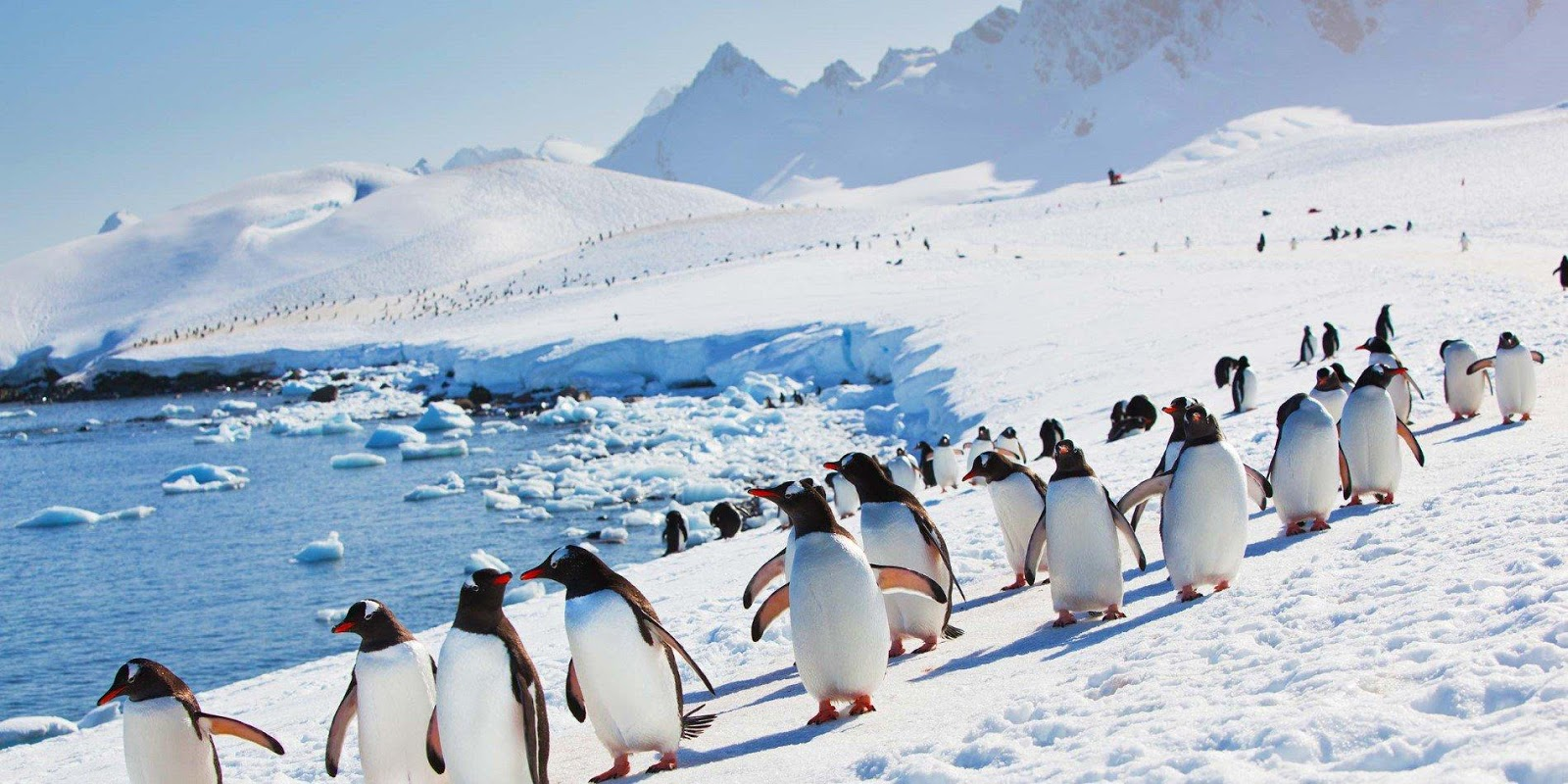 Why Are There No Penguins In The North Pole?