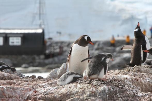 Penguin Postcards and Port Lockroy