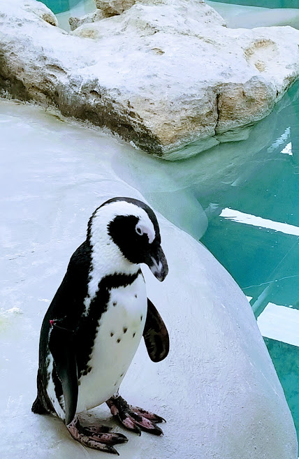 Malaria and the African Penguin