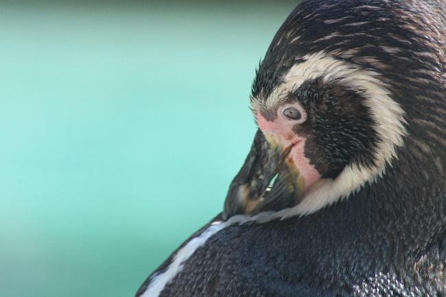 Measuring Penguin Welfare and Stress