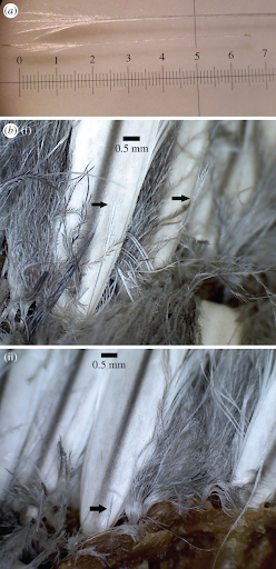 Close up of penguin feathers